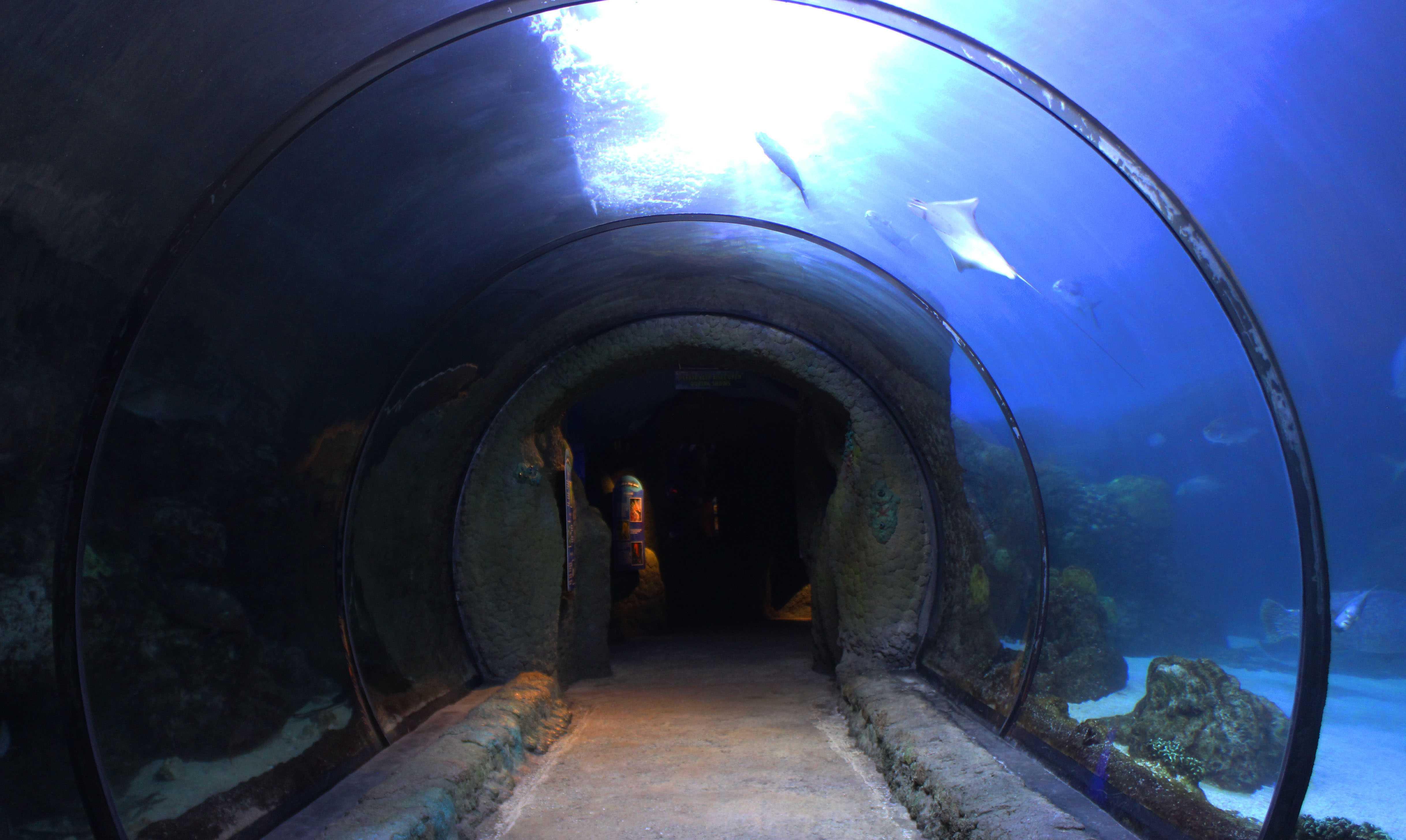 AP Art goes to the Aquarium